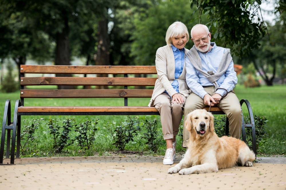 Senior couple sitting on bench in park with golden retriever dog